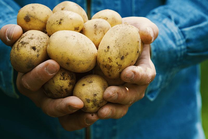 gezondheid-dichtbij-aardappelen