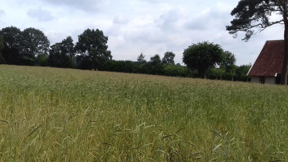 spelt-landgoed-brunninckhuis