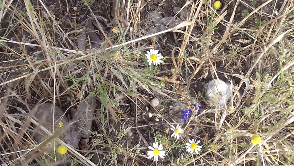 veldgrond-zanderige-bodem